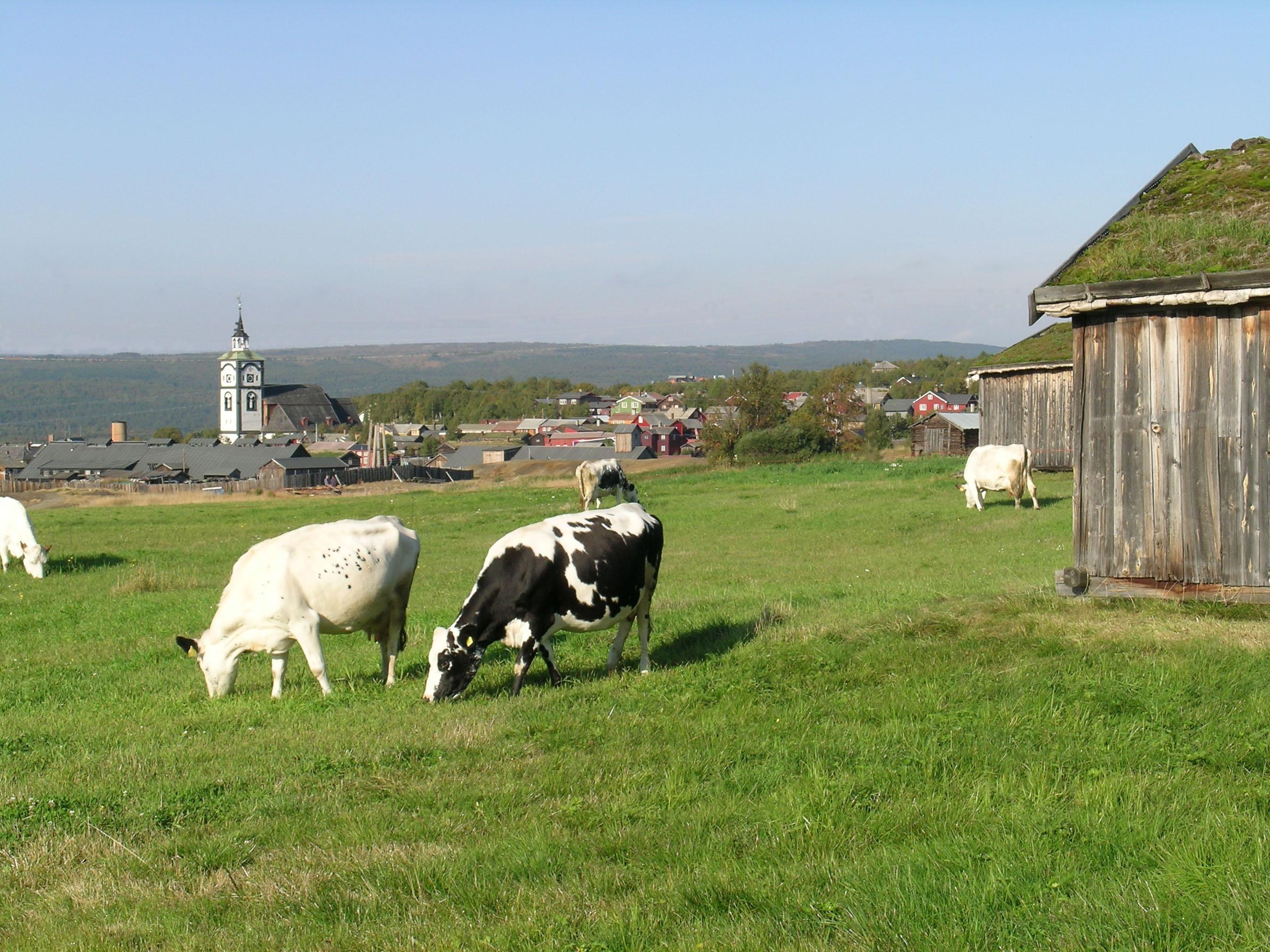 Illustrasjonsfoto: siste nytt fra landbruksavdeling