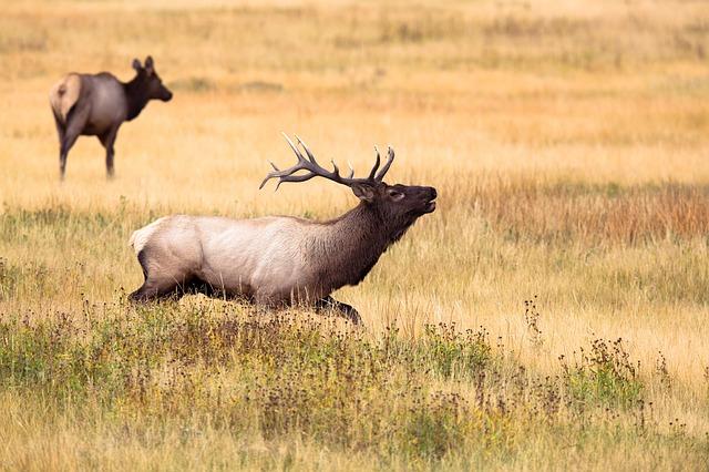 Temakveld: ettersøk av hjortevilt
