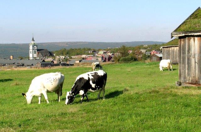 Fagmøte – tilskuddsordninger og regelverk i landbruket