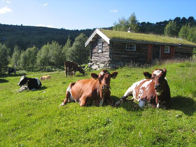 Illustrasjonsfoto landbruk
