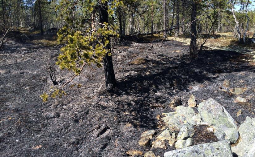 Totalforbud mot bruk av åpen ild i utmark