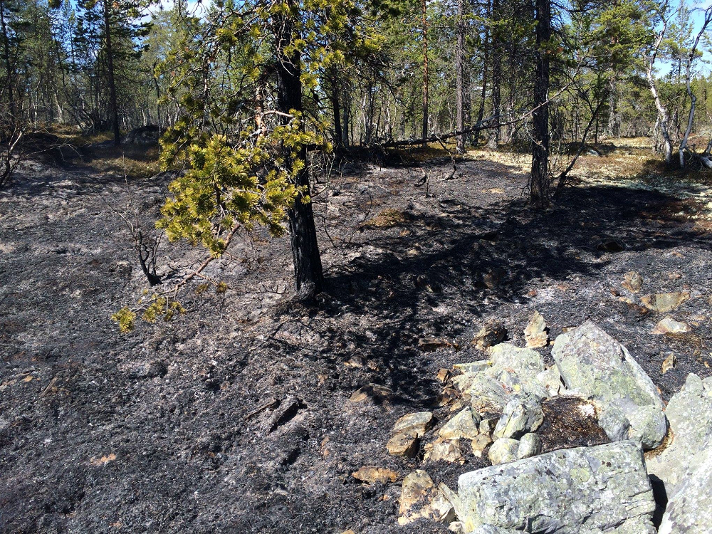 Illustrasjonsfoto: nytt totalforbud mot bruk av åpen ild i utmark