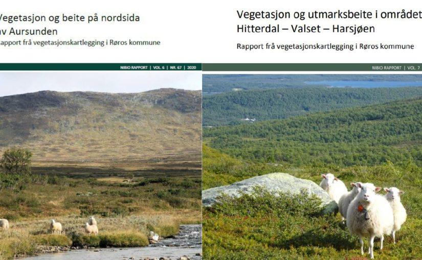 Åpent møte om beiteressursene og -bruken i Røros kommune